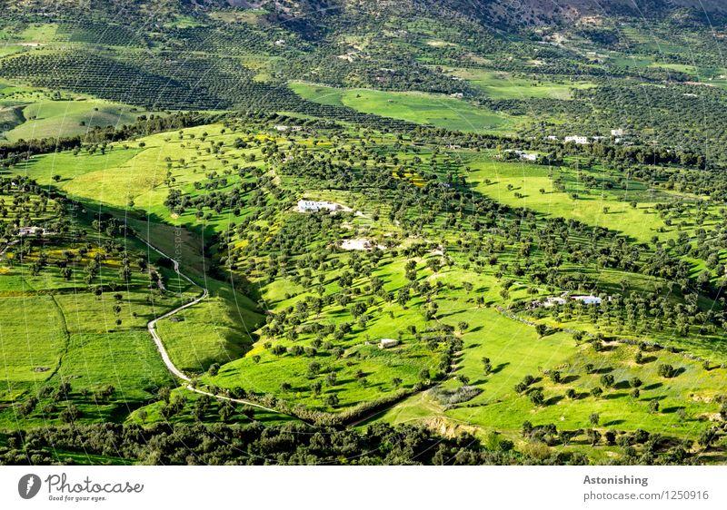 grünes Marokko II Umwelt Natur Landschaft Pflanze Sommer Wetter Schönes Wetter Baum Gras Sträucher Wiese Wald Hügel Fes Straße Wege & Pfade exotisch Ferne
