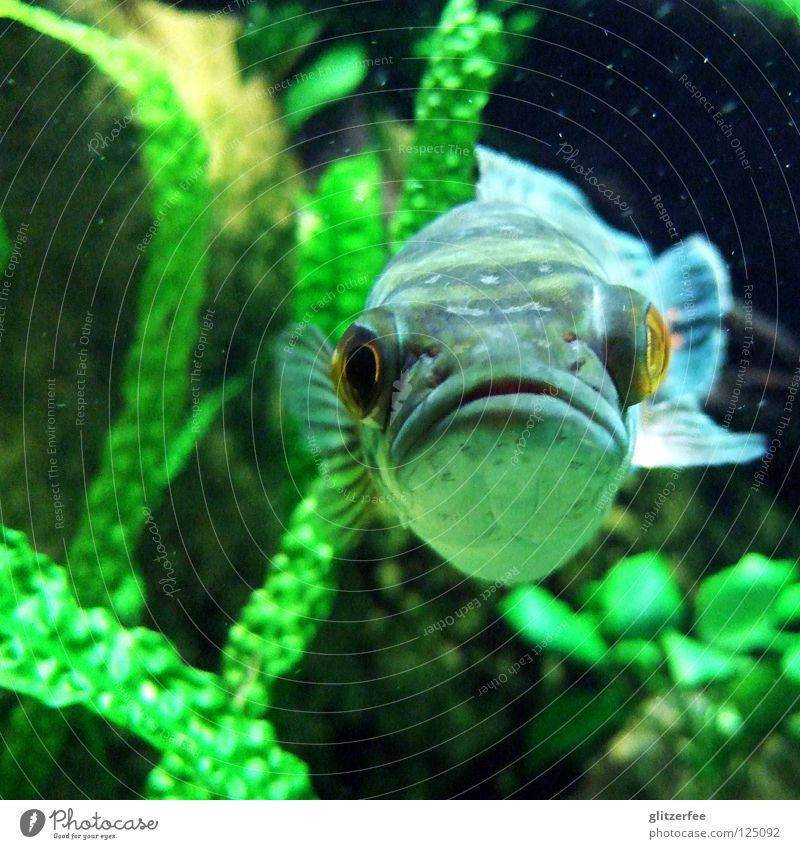 """""""is was?"""" Grimasse Laune negativ Problematik Pflanze Algen Wasserpflanze Aquarium tauchen Schnorcheln dumm grün Korallen See Meer lustig Strand Küste Fisch Maul"""