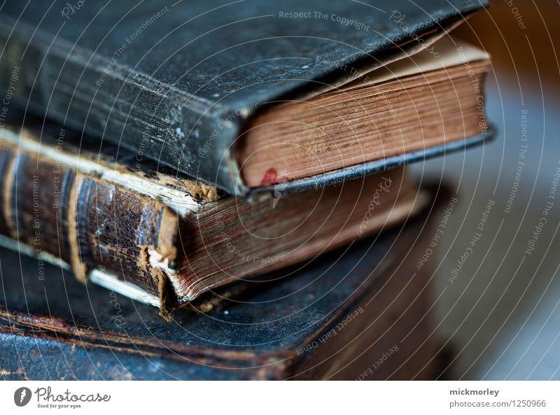 Leseratte in der alten Bibliothek Erholung ruhig träumen Freizeit & Hobby Dekoration & Verzierung lernen Buch Studium Kultur retro Abenteuer lesen Neugier