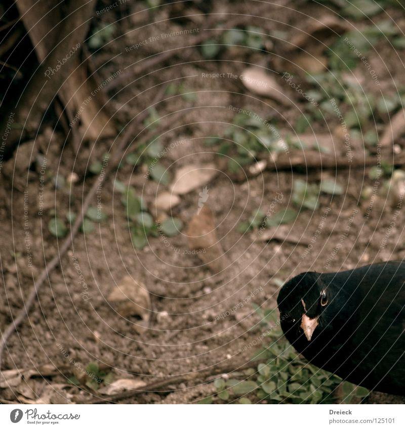Noch (k)ein Vogel... Natur Himmel Blatt schwarz Tier dunkel Landschaft Luft braun fliegen Sträucher Feder Ast Schönes Wetter Schnabel
