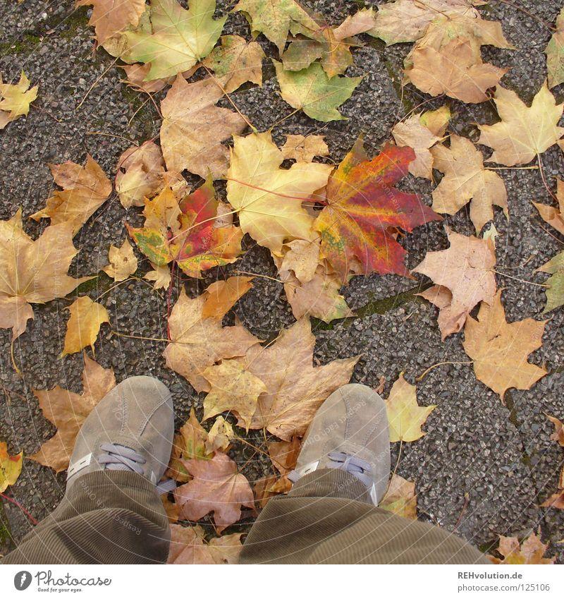 steht! Freude Blatt Einsamkeit kalt Herbst Schuhe braun gehen stehen Wandel & Veränderung Vergänglichkeit Hose trocken Abschied Turnschuh brechen