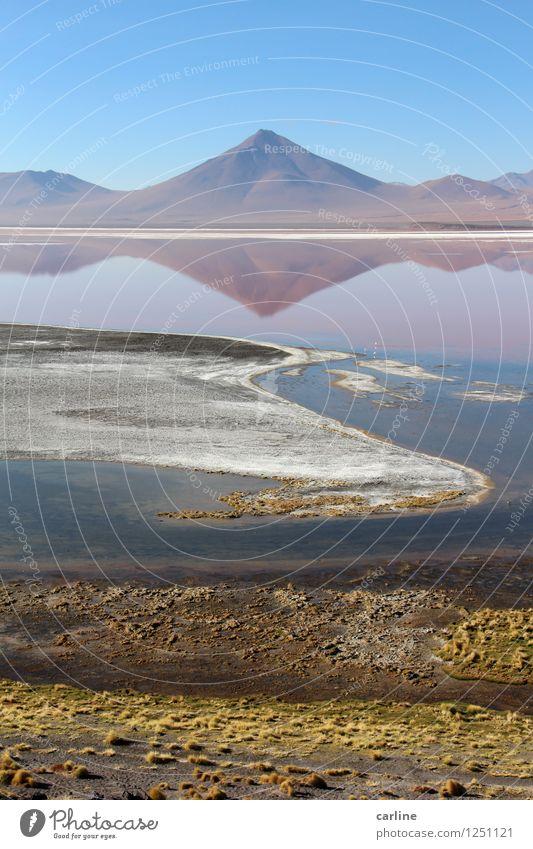 La laguna colorada Umwelt Natur Landschaft Urelemente Erde Wasser Himmel Wolkenloser Himmel Klima Wetter Schönes Wetter Pflanze Algen Hügel Felsen