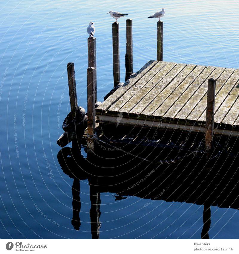 am See Wasser schön blau Holz Vogel Wellen Klarheit Steg Möwe Pfosten Bodensee