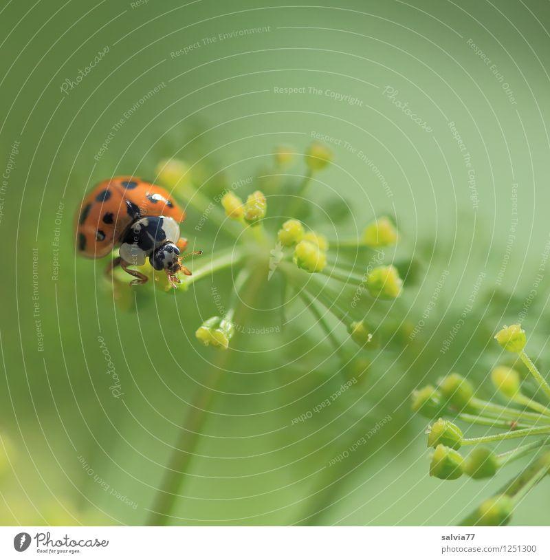 Frühstück Wellness Leben harmonisch Wohlgefühl Zufriedenheit Sinnesorgane Erholung ruhig Umwelt Natur Pflanze Tier Frühling Sommer Blüte Doldenblüte Pollen