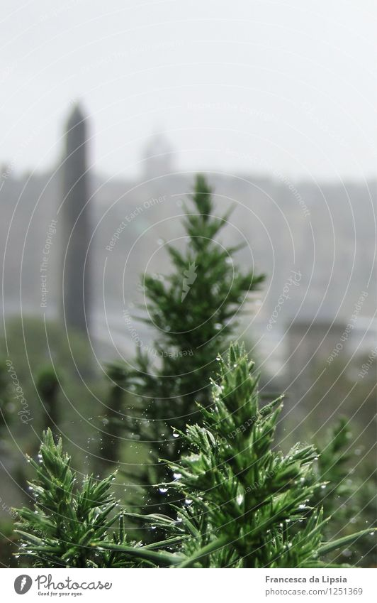 Tannengrün im Tau Pflanze Wasser Einsamkeit ruhig Ferne dunkel kalt Leben Herbst grau Stimmung Park Regen Nebel Wachstum