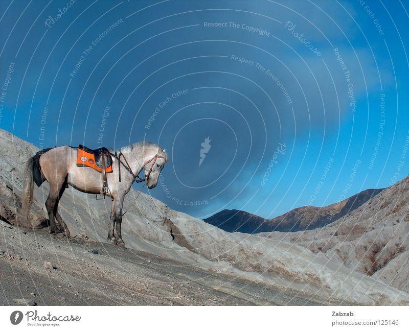 Vulkanpferd Himmel Ferien & Urlaub & Reisen blau Wolken Tier Berge u. Gebirge grau Sand Aussicht Abenteuer Pferd Asien Rauch aufsteigen Reitsport