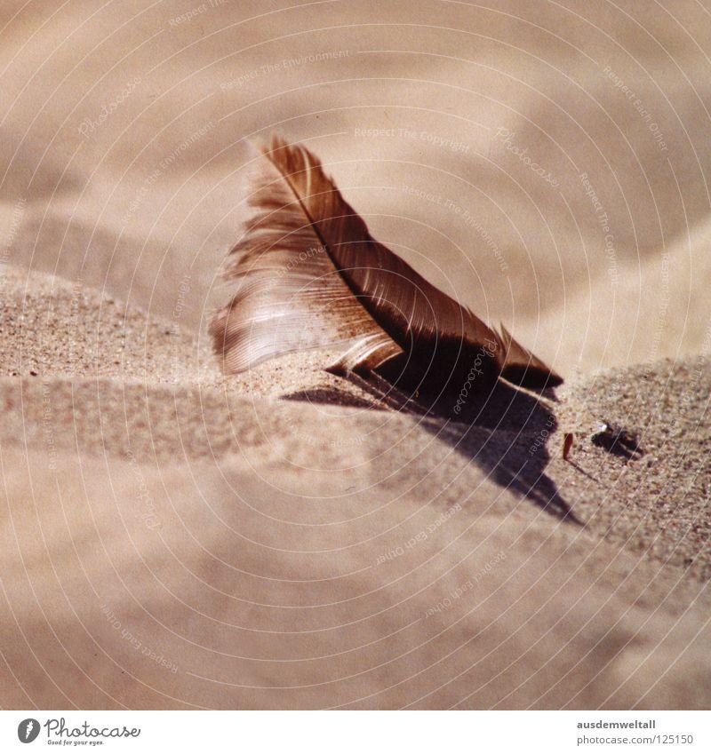 [Beige] beige Strand Sommer Physik schön Ahlbeck Usedom Makroaufnahme Nahaufnahme Küste Sand Feder Ostsee Wärme liegen Schatten ruhig