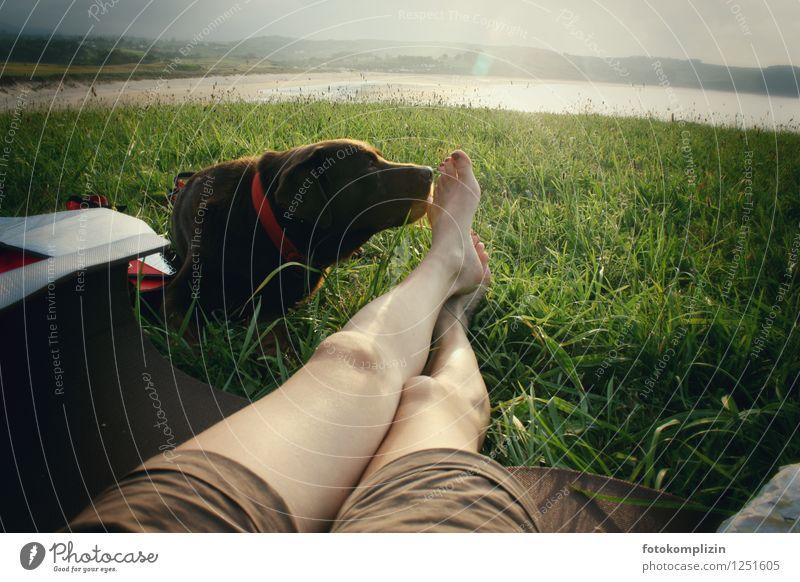 schnüffel hund harmonisch Erholung Freiheit Camping Sommerurlaub Beine Fuß 1 Mensch Natur Shorts Hund Tier berühren liegen lustig Lebensfreude Vertrauen