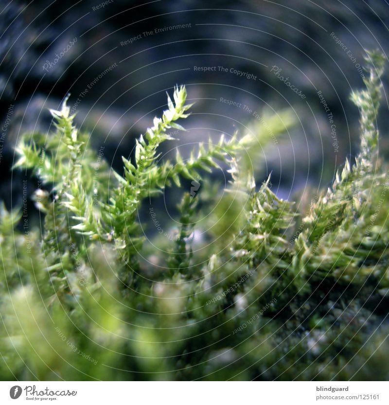 Nix Moos im Los Natur grün Pflanze Leben klein Wachstum weich zart feucht sanft Schicksal Norden Waldboden dezent Holzmehl Nordseite