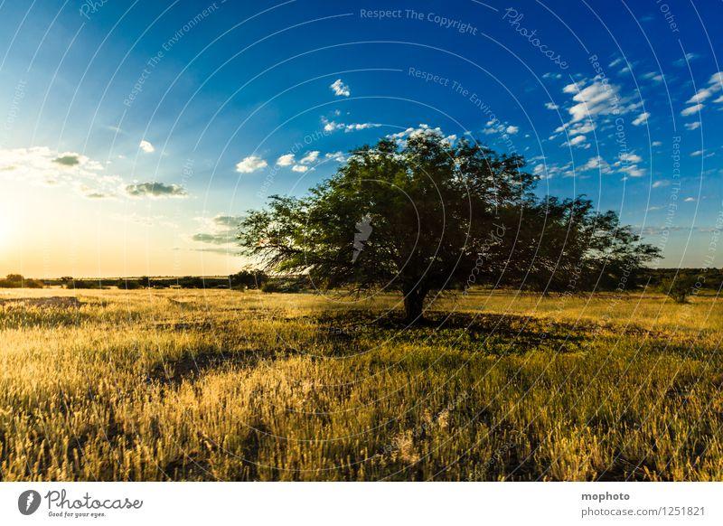 Erleuchtung Himmel Natur Ferien & Urlaub & Reisen blau Pflanze Sonne Baum Landschaft Wolken Umwelt gelb Wärme Wiese Gras natürlich Horizont