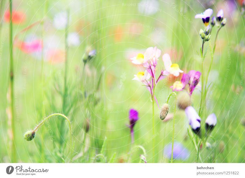 zum träumen Natur Pflanze Frühling Sommer Schönes Wetter Blume Gras Blatt Blüte Garten Park Wiese Blühend verblüht Wachstum schön grün violett Stengel