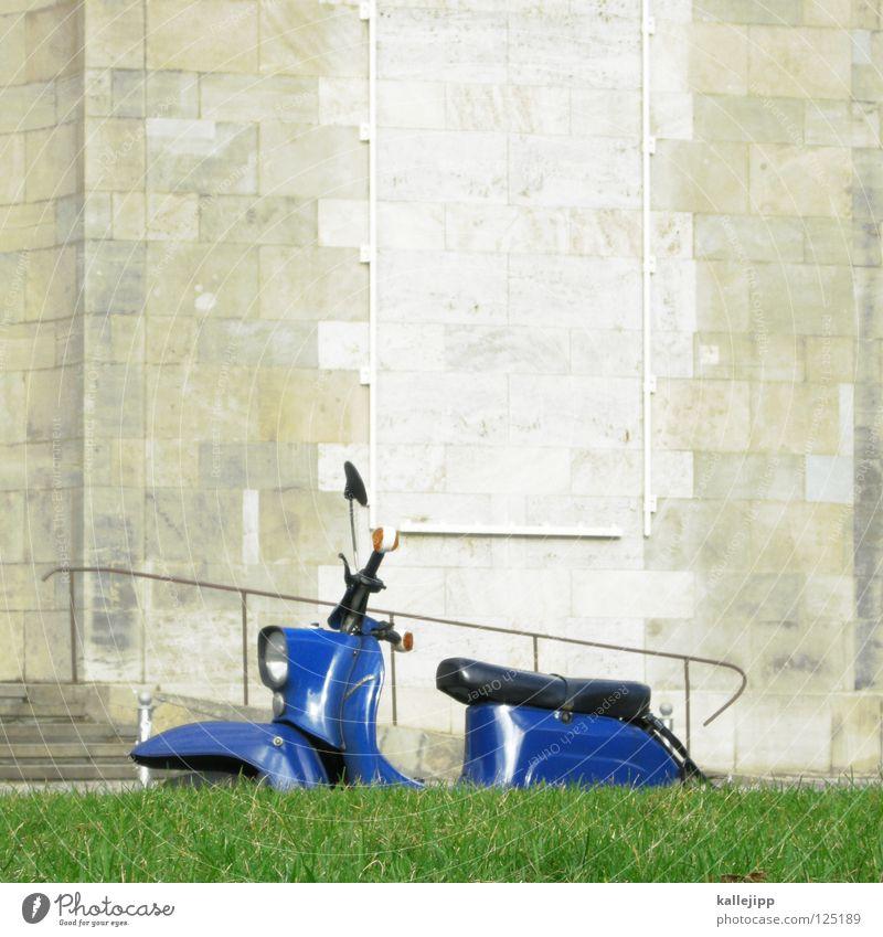 sonne tanken Natur alt Blume blau Stadt Pflanze ruhig Erholung Gras Garten Wege & Pfade Park Landschaft Umwelt Beton Erde