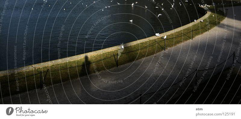 lost 14 See Teich Wasseroberfläche Vogel Möwe Kultur Kulturlandschaft ruhig Aufenthalt Spaziergang beobachten Pause träumen Gedanke unterwegs Garten Park Winter