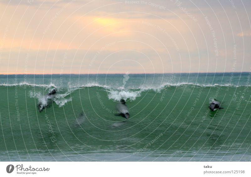 DANCE OF THE DOLPHINS I Wasser weiß Sonne Meer grün blau Tier springen Spielen Wal Tanzen Wellen beobachten Theaterschauspiel Säugetier
