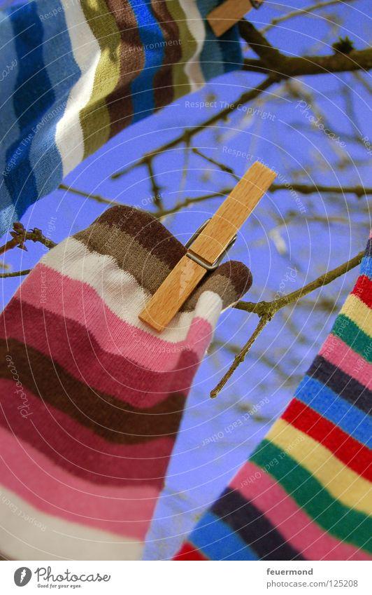 Sockenbaum Strümpfe Wäsche aufhängen Wäscheleine Frühling Waschtag Frühjahrsputz Streifen gestreift Bekleidung Wäschetag Wäscheklammen festhalten Wäsche waschen