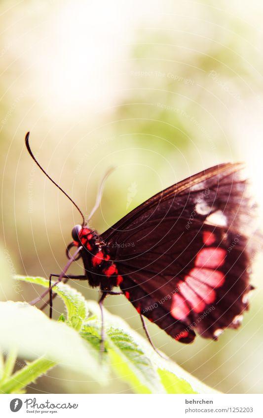 schmetterviech Natur Pflanze schön Sommer Baum Erholung Blatt Tier Frühling Wiese außergewöhnlich Garten Beine fliegen Park Wildtier