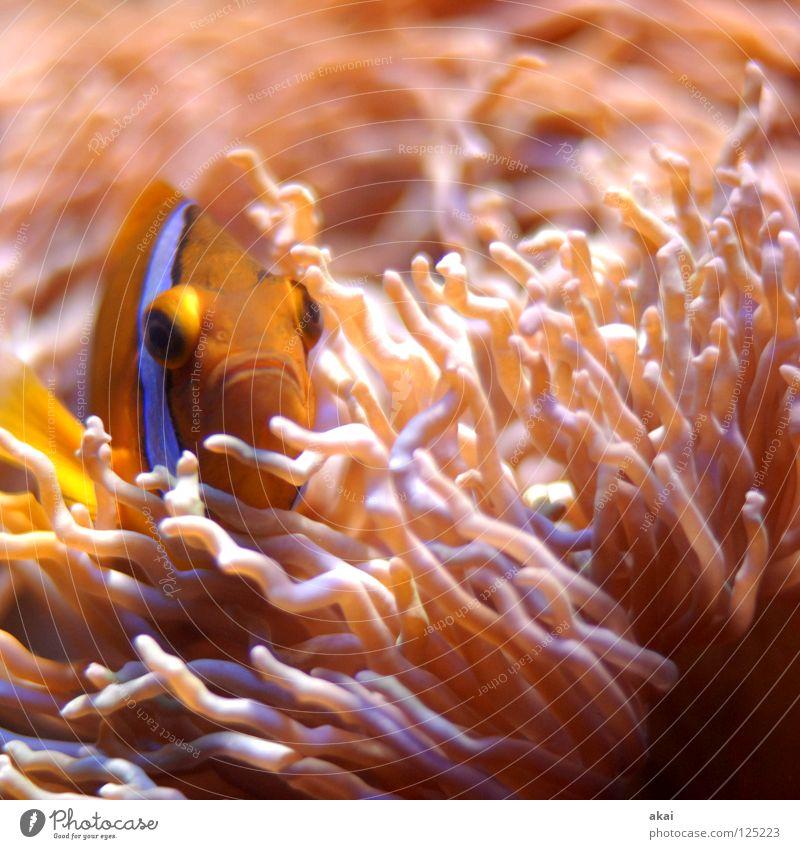 Waterworld Aquarium Clownfisch Findet Nemo Korallen rot rosa Tarnung dunkel krumm Bewegungsunschärfe Unschärfe Langzeitbelichtung Fischauge Versteck Wasser
