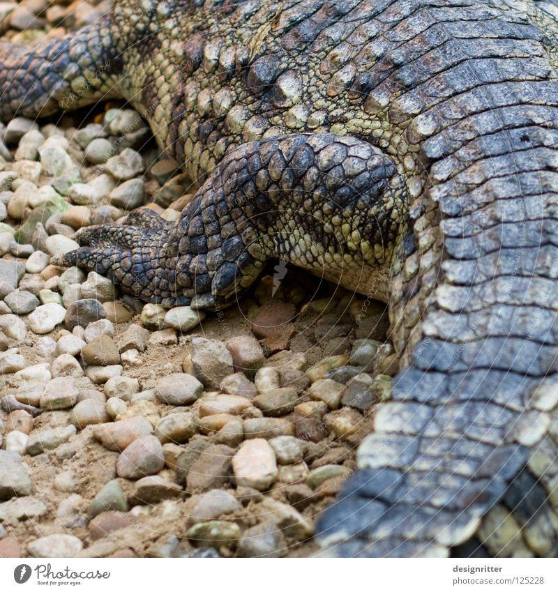 schuppig Tier Tod Beine Haut gefährlich bedrohlich Wildtier Jagd Leder Scheune krabbeln Reptil Tasche töten Krallen Jäger