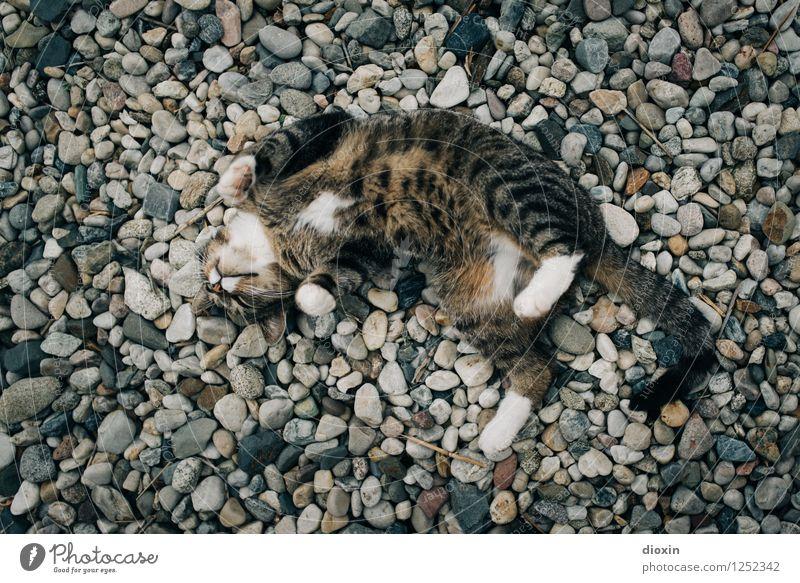 Spreedorado | einfach mal wohlfühlen! Tier Haustier Katze 1 Kies Kieselsteine Stein Erholung genießen kuschlig natürlich niedlich Zufriedenheit Lebensfreude