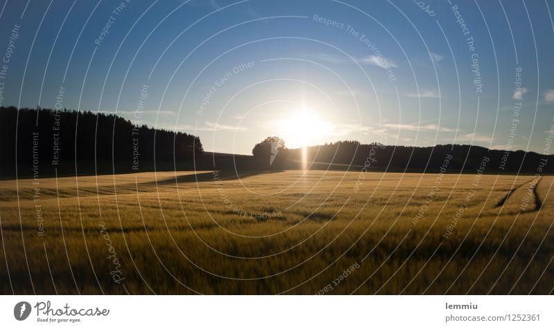 Abendstimmung Sommer Natur Sonne Sonnenaufgang Sonnenuntergang Sonnenlicht Herbst Schönes Wetter Nutzpflanze Feld blau braun Stimmung Warmherzigkeit Romantik