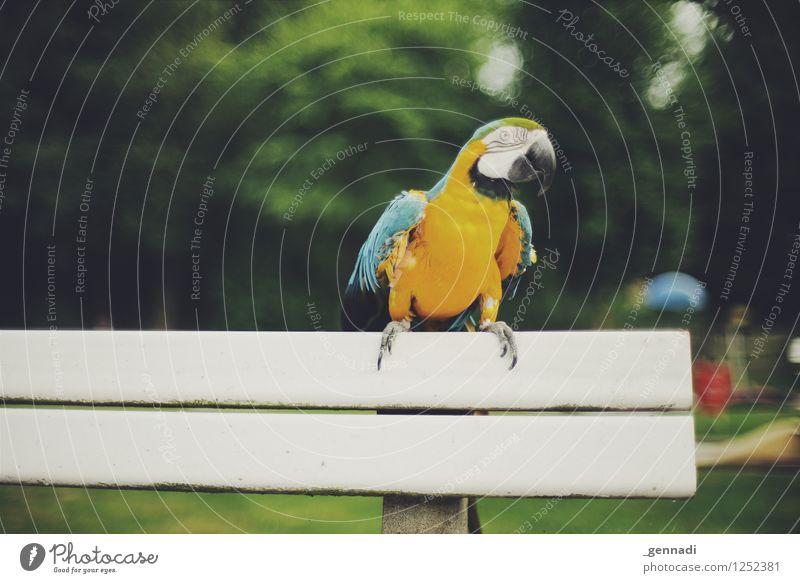 Komischer Vogel Haustier Ara Papageienvogel 1 Tier außergewöhnlich mehrfarbig gelb Bankgebäude Außenaufnahme Freiflug frei Fröhlichkeit Farbfoto Menschenleer