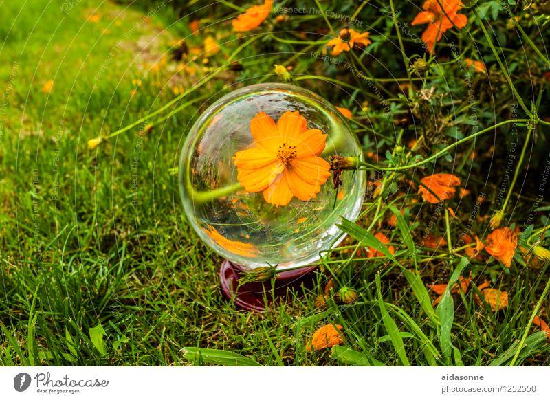 glaskugel Natur Pflanze grün Farbe Sommer Blume Freude Blüte Wiese Gras Freiheit Garten Park orange elegant Lebensfreude