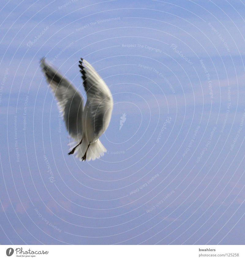bitte nicht abstürzen Möwe weiß See Wolken Himmel Vogel blau Bodensee fliegen Freiheit Flügel Feder