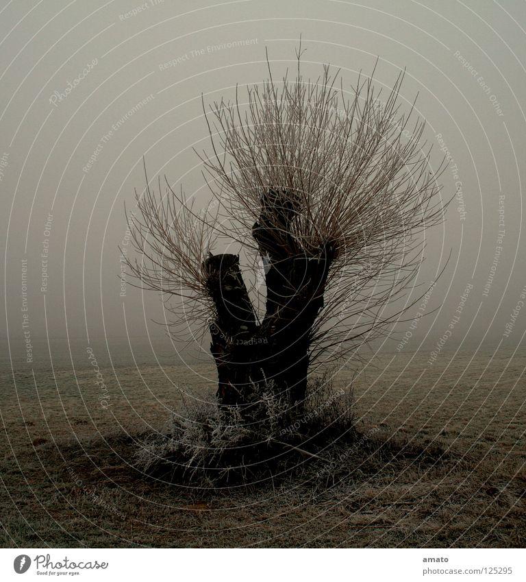 Im Ried Winter Einsamkeit dunkel kalt Schnee Trauer Weide Raureif Nebelstimmung