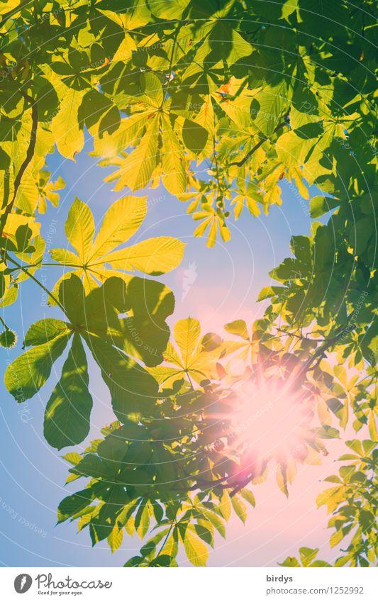 Farbenspiel Natur Farbe Sommer Sonne Landschaft außergewöhnlich glänzend leuchten Wachstum Kreativität Lebensfreude Warmherzigkeit Schönes Wetter Kitsch Wolkenloser Himmel Duft