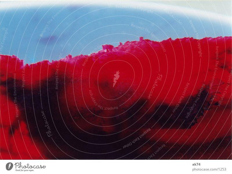 Noch mal rote Beete Gegenlicht Gesundheit Makroaufnahme Rote Beete Bildausschnitt Anschnitt Detailaufnahme Gesunde Ernährung