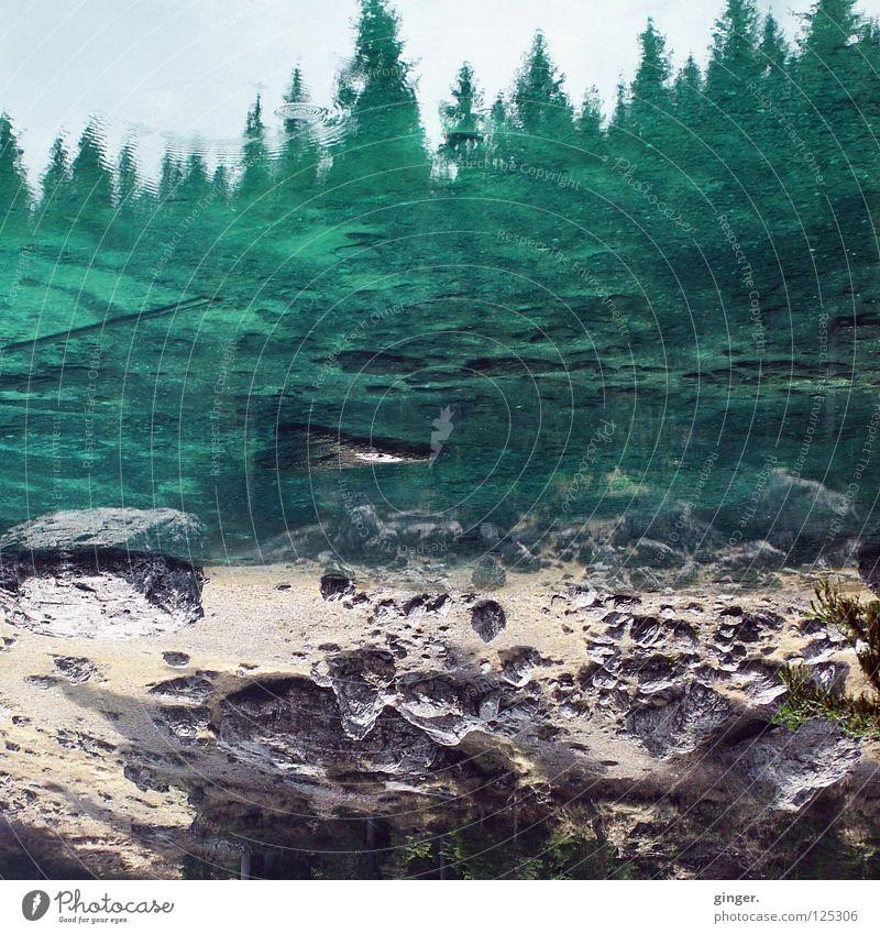 Verkehrte Welt - Wasserwald an Steinen Natur Sand Himmel Baum Wald See blau grün beige Nadelbaum Geröll Nadelwald steinig Menschenleer Textfreiraum unten