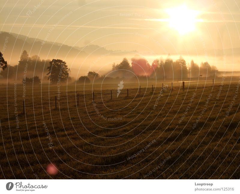 Sonnenaufgang im Allgäu Nebel Feld Wiese Alpen Berge u. Gebirge