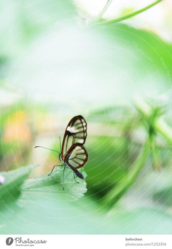 übersehbar? Natur Pflanze grün schön Sommer Baum Erholung Blatt Tier Frühling Wiese klein außergewöhnlich Garten fliegen Park