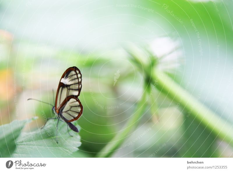 winzige schönheit Natur Pflanze grün Sommer Erholung Blatt Tier Frühling Wiese klein Garten außergewöhnlich fliegen Park träumen