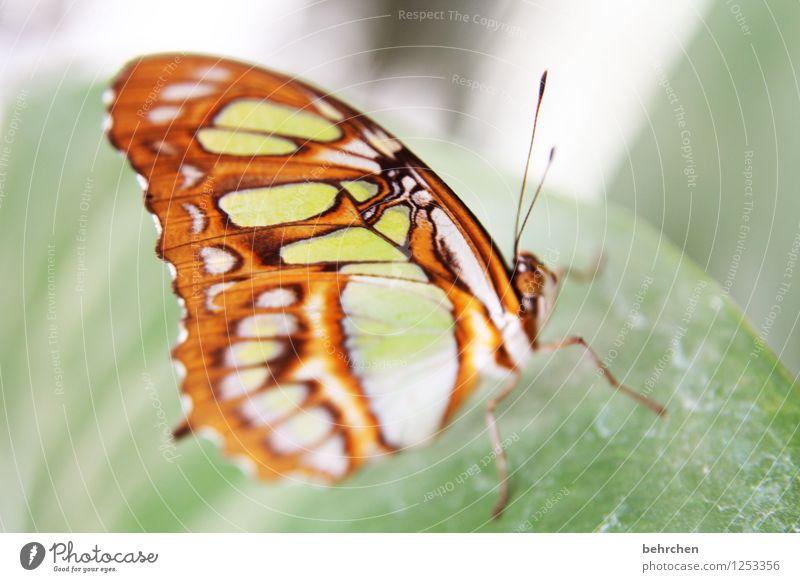 im detail Natur Pflanze Tier Frühling Sommer Schönes Wetter Baum Sträucher Blatt Garten Park Wiese Wildtier Schmetterling Tiergesicht Flügel Facettenauge 1