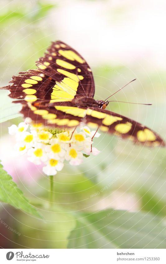 malachit Natur Pflanze grün schön Sommer Blume Blatt Tier gelb Frühling Blüte außergewöhnlich fliegen braun Wildtier sitzen