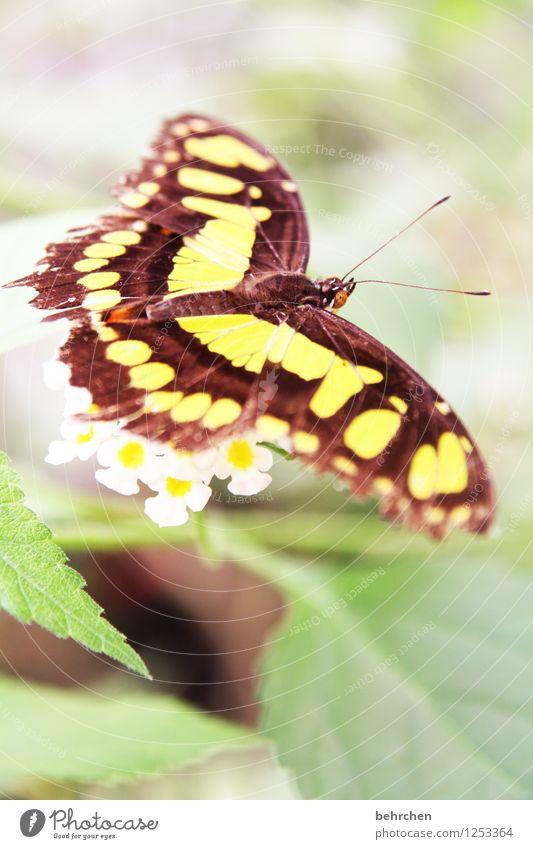 schwerelos Natur Pflanze Tier Frühling Sommer Schönes Wetter Blume Blatt Blüte Garten Park Wiese Wildtier Schmetterling Flügel 1 beobachten Blühend Duft