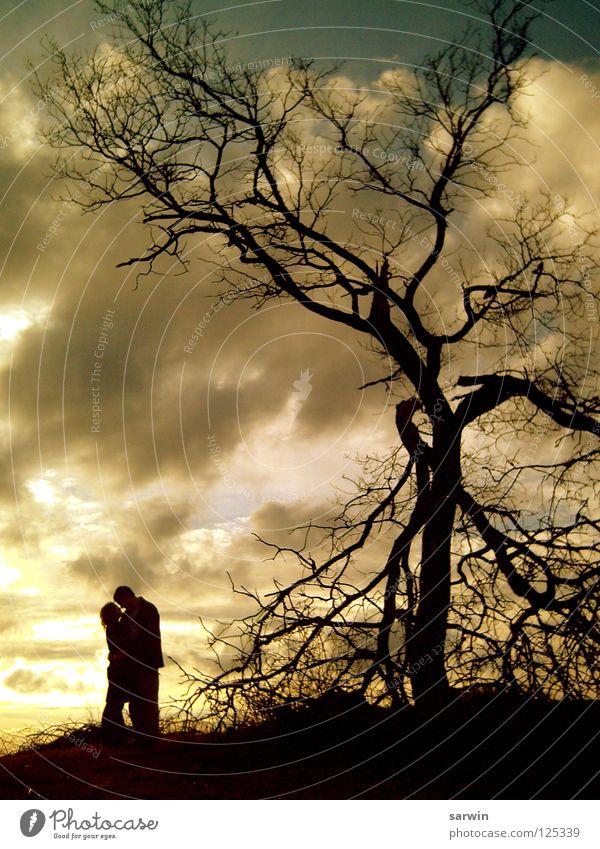 Sonnenlicht Baum Küssen Romantik Sonnenuntergang Wolken Valentinstag Liebe Abend Paar Schatten Siluette paarweise Liebespaar Zusammensein Partnerschaft