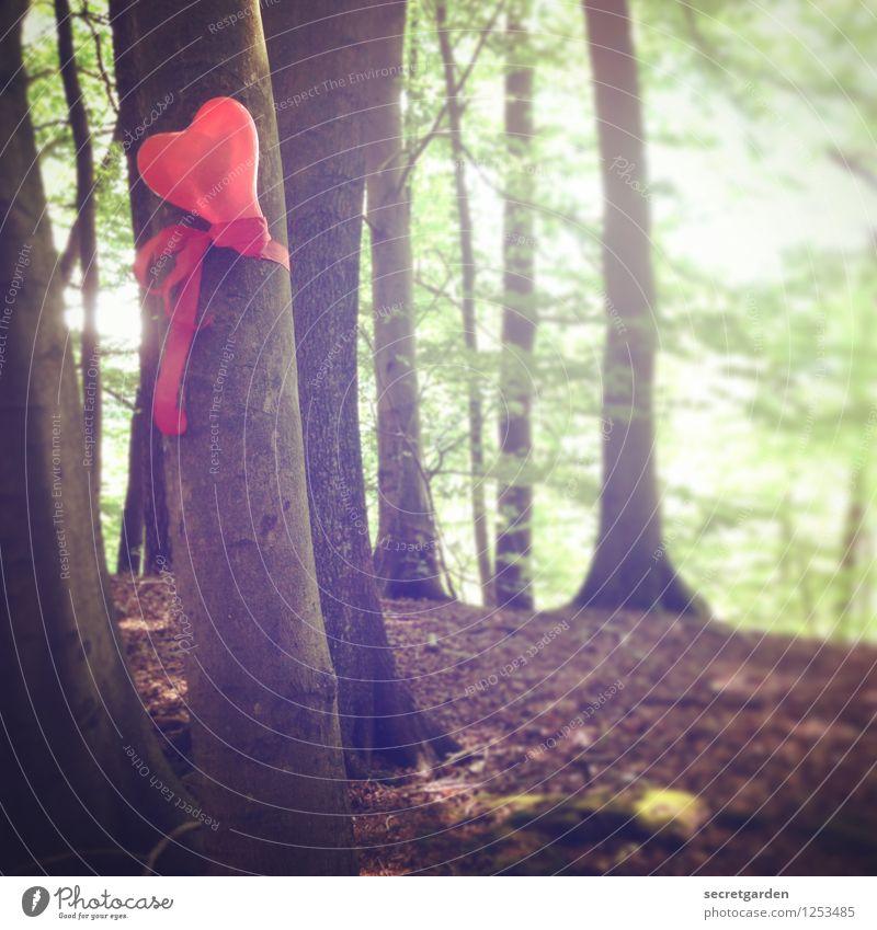 fz3 - keep calm and hug trees. Natur grün Sommer rot Wald Liebe Herbst Glück braun Park Dekoration & Verzierung Erde Geburtstag Herz Romantik Zeichen