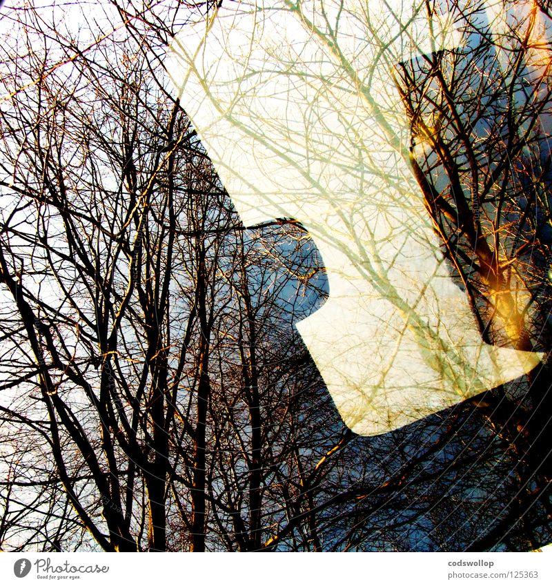 formhimmel Bagger Reflexion & Spiegelung Fenster Baum Schiebedach grün Winter Licht Verkehr sunroof tree fahrerhaus Ast Gerät digger führerstandklimatisierung