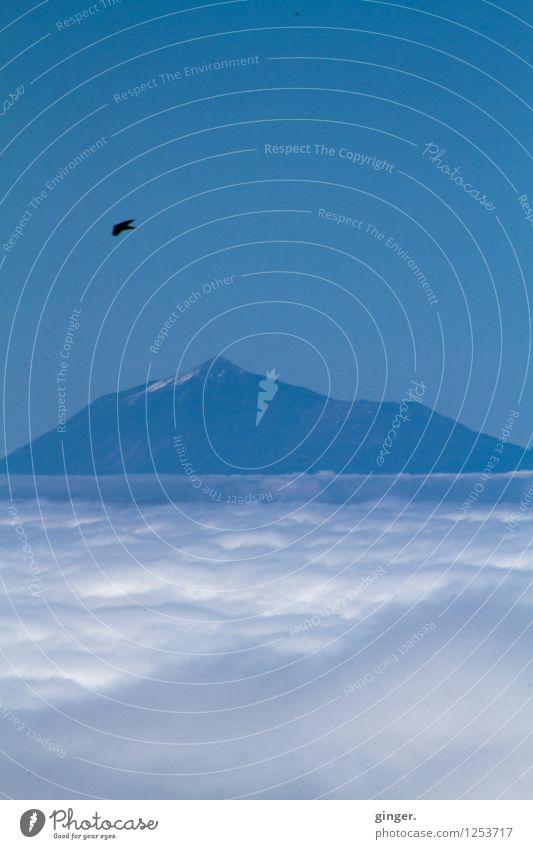 Cloudbird Umwelt Natur Landschaft Himmel Wolken Frühling Schnee Felsen Berge u. Gebirge Teide Insel Teneriffa Tier Vogel 1 blau weiß Sehnsucht hell dunkel