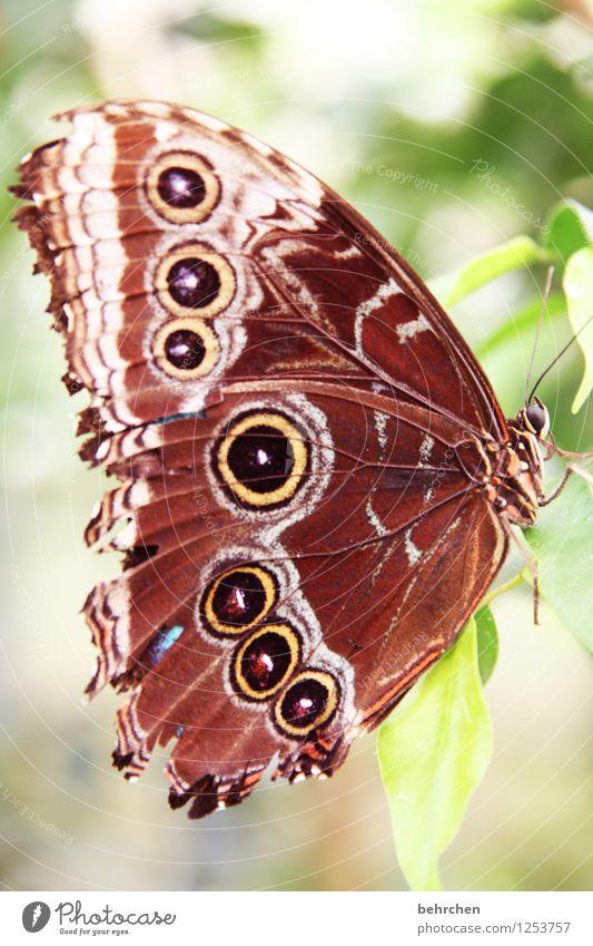 schmettertag Natur Pflanze Tier Frühling Sommer Schönes Wetter Baum Blatt Garten Park Wiese Wildtier Schmetterling Tiergesicht Flügel blauer morphofalter 1