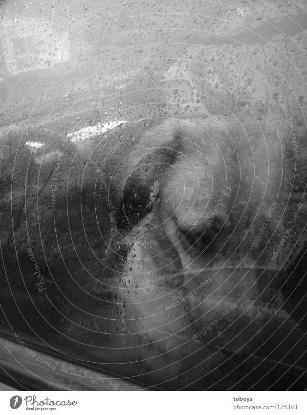hundewetter Tier Wassertropfen Regen Gewitter Fenster PKW Haustier Hund Pfote sitzen Traurigkeit Trauer Einsamkeit Verzweiflung Parkplatz parken Schnauze