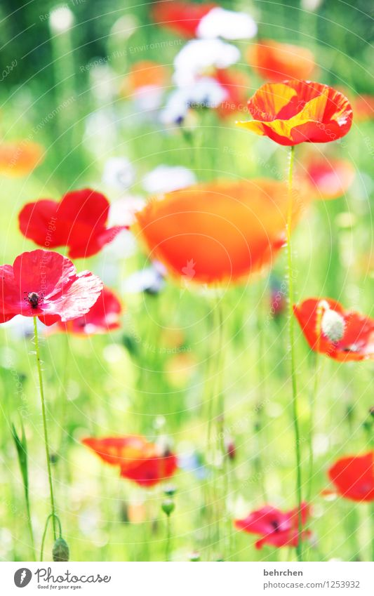 immer wieder mo(h)ntags... Natur Pflanze grün schön Sommer Blume rot Blatt Blüte Frühling Wiese Gras Garten Park orange Feld
