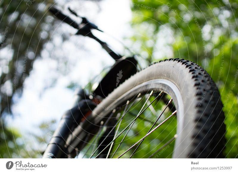 Überrollt Freizeit & Hobby Sport Fahrradfahren Mountainbike Fahrradtour Fahrradreifen Fahrradweg Natur Wald Fußweg grün Außenaufnahme Froschperspektive Fitness