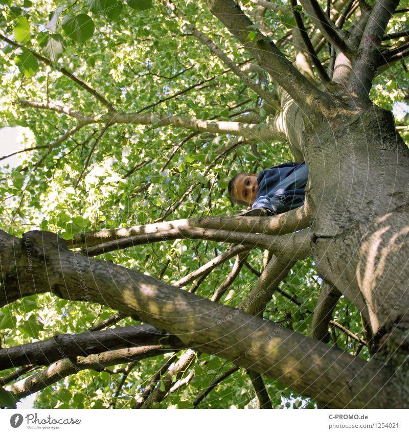 Junge auf Kletterbaum schaut herunter Klettern Bergsteigen Kind Mensch Kindheit 3-8 Jahre 8-13 Jahre Baum Wald Holz bedrohlich gigantisch hoch Neugier grün Mut