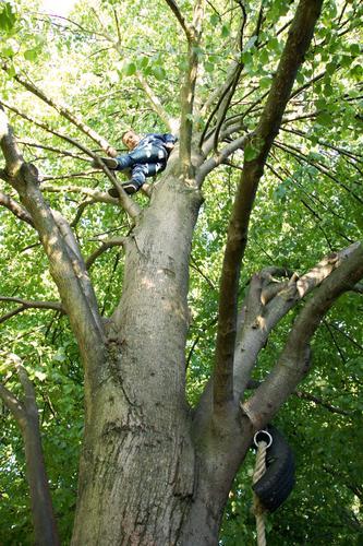hoch hinaus Mensch Kind grün Sommer Baum Freude Wald Junge Holz Glück maskulin Angst Kindheit gefährlich bedrohlich