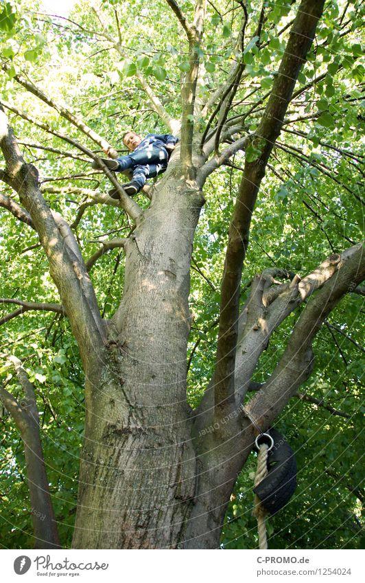 Junge auf Kletterbaum Mensch maskulin Bruder Kindheit 1 3-8 Jahre 8-13 Jahre Baum Wald Holz gigantisch hoch grün Freude Glück Willensstärke Mut Vertrauen