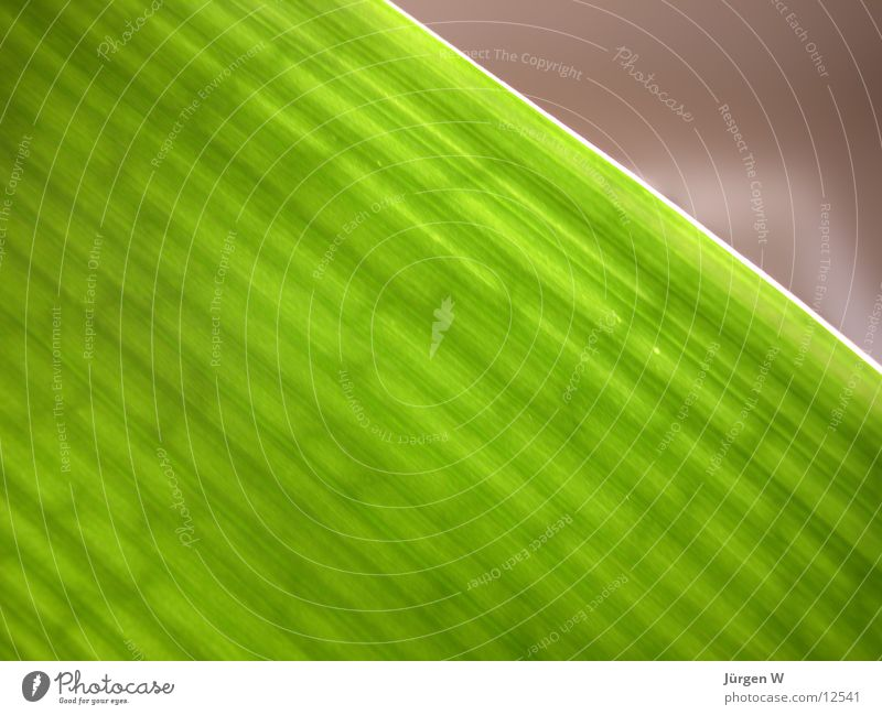 Gruen 1 Natur grün Pflanze Blatt
