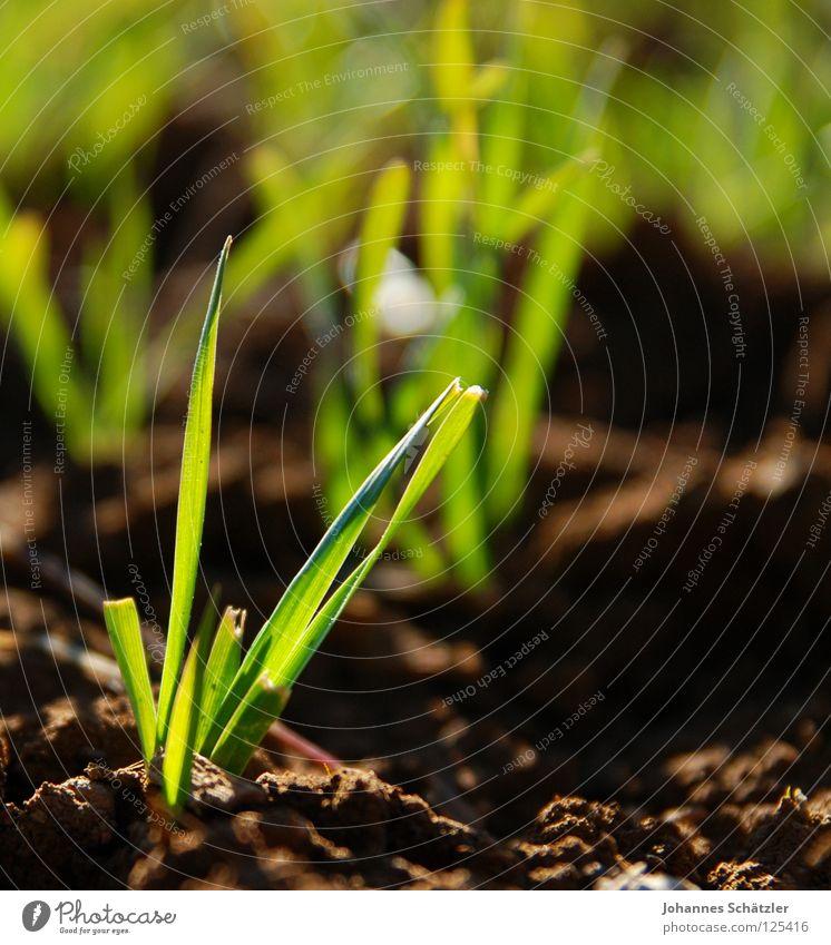 Frühling springen Gras grün saftig Feld Wiese Landwirtschaft Halm Aussaat säen Frühlingsgefühle Erde